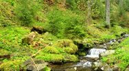 Stock Video Footage of Brook with cascades in the conifer forest