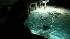 Sharks and stingray feeding 04 Stock Footage