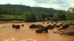A herd of Asian elephants bathe in the river. Stock Footage