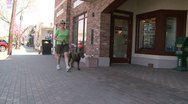 Stock Video Footage of Woman walking her Chocolate Lab down the sidewalk (2 of 2)