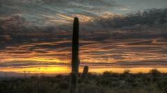 HDR Timelapse Sunset Arizona Cactus Stock Footage