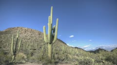 HDR Timelapse Arizona Cactus - stock footage