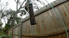 A squirrel raids a bird feeder Stock Footage
