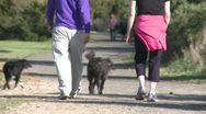 Stock Video Footage of A couple walking down a hiking trail each with their dog on a Leash (1 of 2)