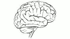 brain sketch - stock footage