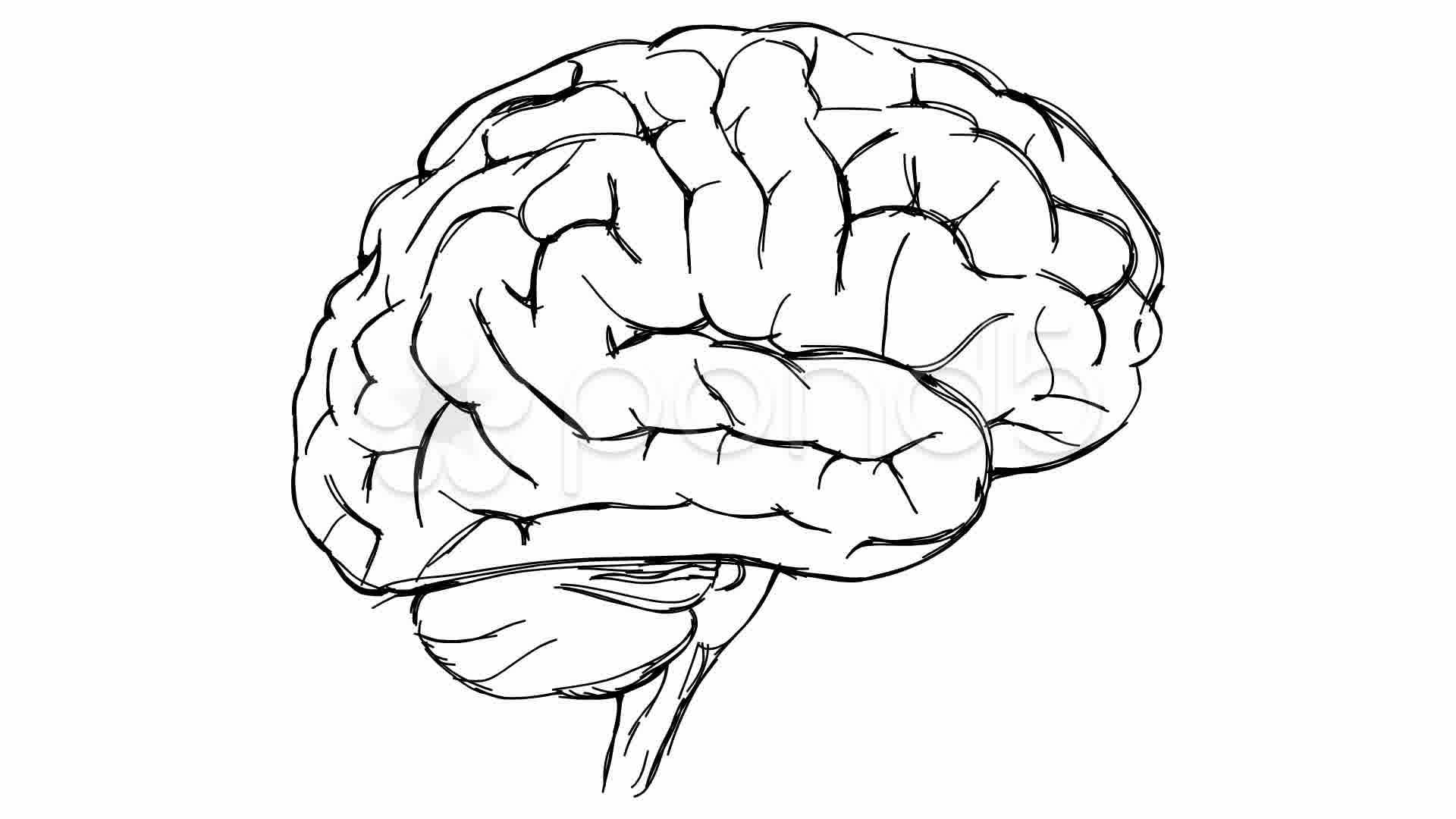 Brain Sketch ~ Video Clip Royalty Free #10775087 | Pond5