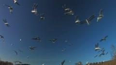 Bird nature reserve Stock Footage
