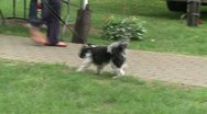 Dog on a leash at a town fair (2 of 2) Stock Footage