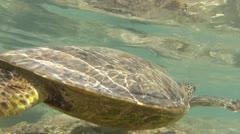 Sea Turtle Underwater Stock Footage