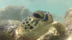 Sea Turtle - stock footage