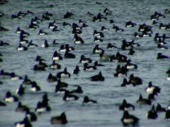 Birds on Fehmarn 3 Stock Footage