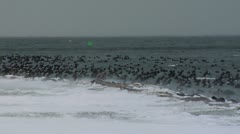 Birds on Fehmarn 2 Stock Footage