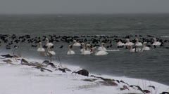 Birds on Fehmarn 1 Stock Footage