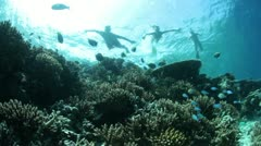 reef with snorklers - stock footage