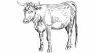 Stock Video Footage of cow sketch