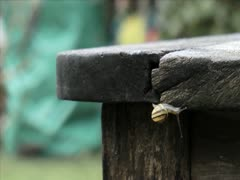 Snail Timelapse 1 Stock Footage