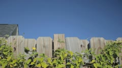 Over the fence Stock Footage
