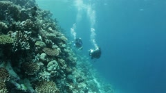 divers in current along reef - stock footage