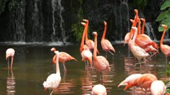 Flamingo #2 - stock footage