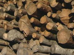 Stack tree log blue sky Stock Footage