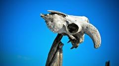 Skull Stock Footage