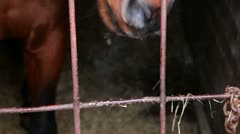 Horse stand behind lattice in stable Stock Footage