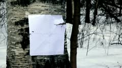 Bullet hit paper shooting mark on birch Stock Footage