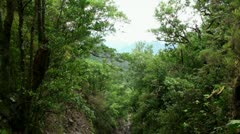 Mountain forest in Madeira 20120225 131809 Stock Footage