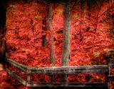 Stock Photo of Red trees in forest with fence
