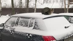 The cat on the roof of the car Stock Footage