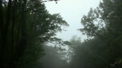 Clouds and fog in forest mountains 20120225 143756 Stock Footage
