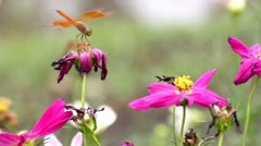 Dragonflies Stock Footage