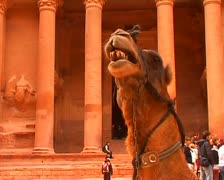 Camel at Petra Stock Footage