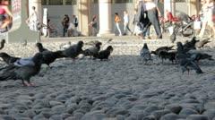 Pigeons feeding on Breadcrumbs Stock Footage