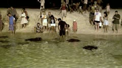 Feeding stingrays in the Maldives Stock Footage