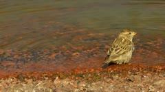 Birdbath 50p 1/5 Stock Footage