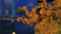 Yellow butterfly orchids, roll motion of the lens, the hotel scene Stock Footage