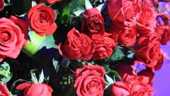 Rose background, sports lens - stock footage
