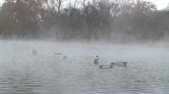Ducks on the lake with hot springs. Budapest Stock Footage