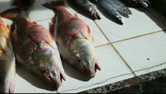 Fishmonger Copacabana, Rio de Janeiro Stock Footage