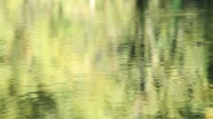 Stock Video Footage of swamp 09 water strider