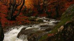 Relaxing Autumn Waterfall Stock Footage