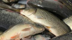 Freshwater Fish Stock Footage