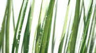 Stock Video Footage of Grass on white