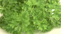 A Bunch of Fresh Parsley Stock Footage