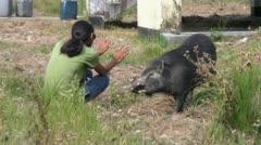 The Friendly Wild Boar Stock Footage