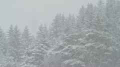 Snowfall with forest in background Stock Footage