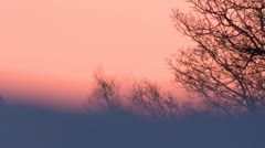 Very pink sunset sky behind snowy ridge and trees Stock Footage