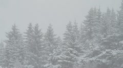 Heavy snowfall with forest in the background Stock Footage