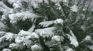 Stock Video Footage of Snowfall On Trees